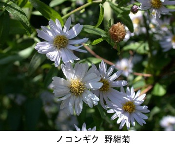 f:id:yachikusakusaki:20200417233953j:plain