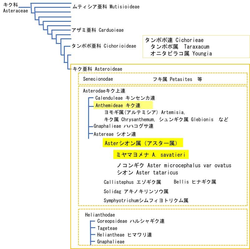 f:id:yachikusakusaki:20200418001029j:plain