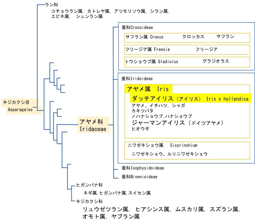 f:id:yachikusakusaki:20200420122325j:plain