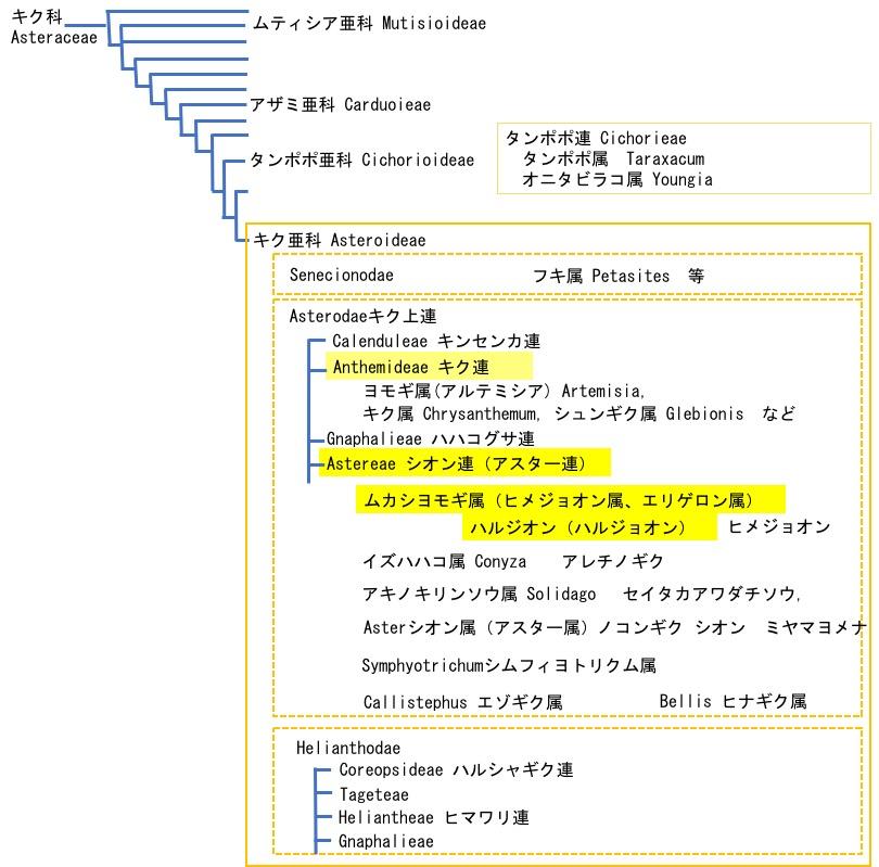 f:id:yachikusakusaki:20200425005121j:plain