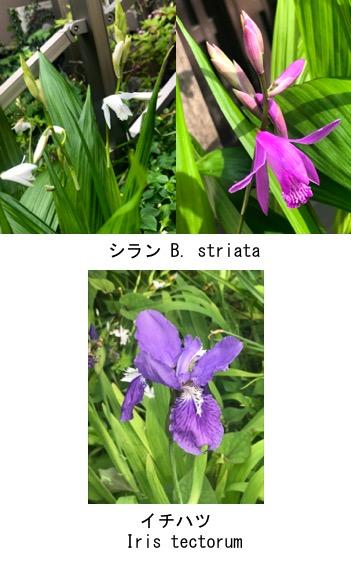 f:id:yachikusakusaki:20200426151023j:plain