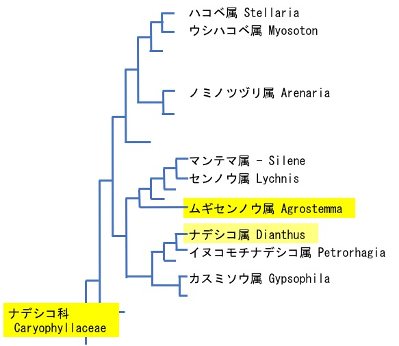 f:id:yachikusakusaki:20200427000520j:plain