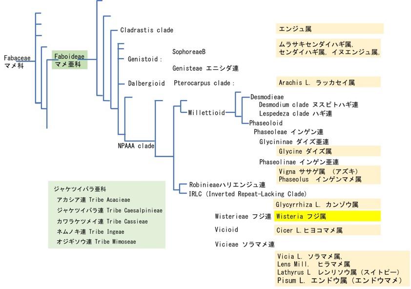 f:id:yachikusakusaki:20200428003946j:plain