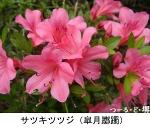 f:id:yachikusakusaki:20200501181446j:plain
