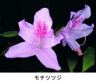 f:id:yachikusakusaki:20200501181907j:plain
