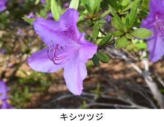 f:id:yachikusakusaki:20200501182220j:plain