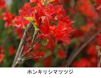 f:id:yachikusakusaki:20200501214522j:plain