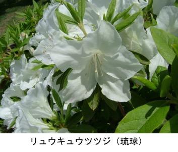 f:id:yachikusakusaki:20200501215550j:plain