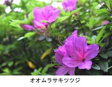f:id:yachikusakusaki:20200501220113j:plain