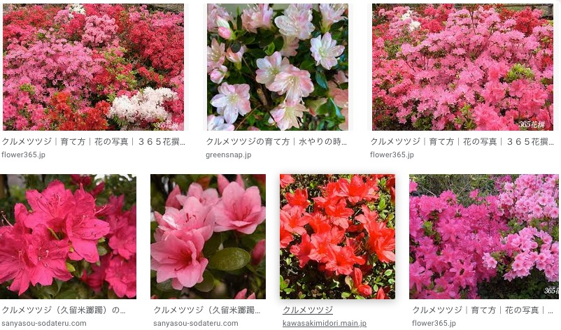 f:id:yachikusakusaki:20200501220519j:plain