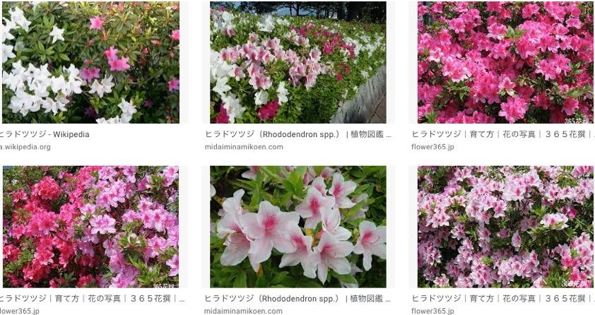 f:id:yachikusakusaki:20200501220950j:plain