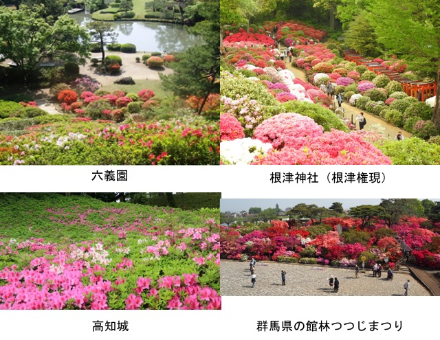 f:id:yachikusakusaki:20200503004012j:plain