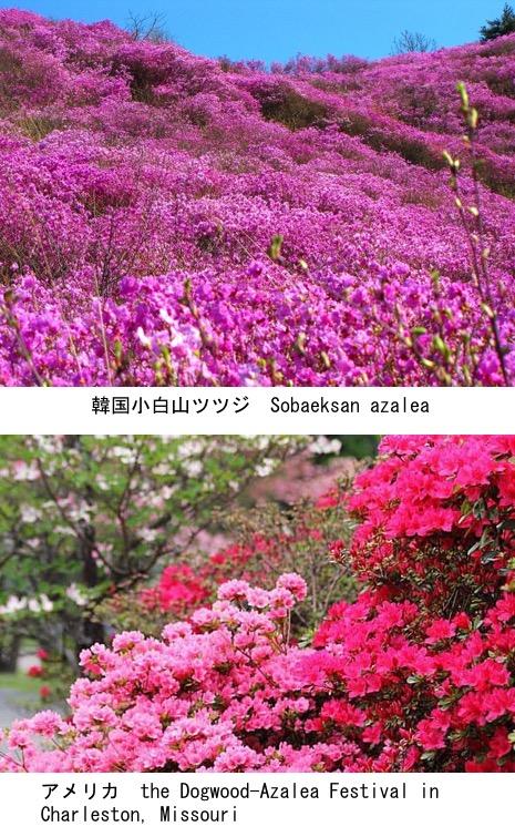 f:id:yachikusakusaki:20200503004425j:plain