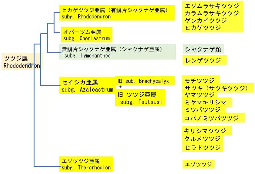 f:id:yachikusakusaki:20200503013642j:plain