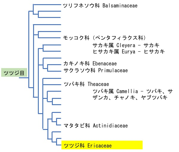 f:id:yachikusakusaki:20200503162940j:plain