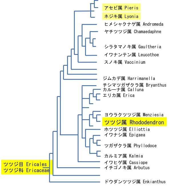 f:id:yachikusakusaki:20200503162952j:plain