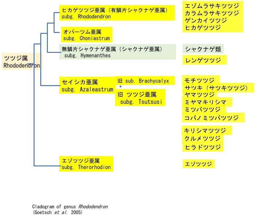f:id:yachikusakusaki:20200503163026j:plain