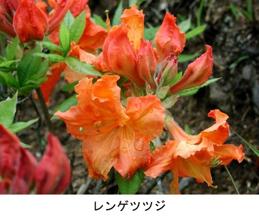 f:id:yachikusakusaki:20200503163611j:plain