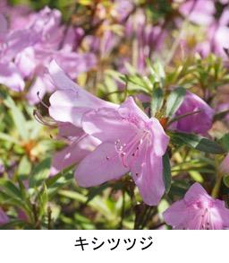 f:id:yachikusakusaki:20200503164120j:plain
