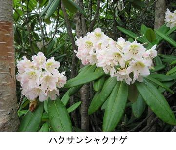 f:id:yachikusakusaki:20200503164359j:plain