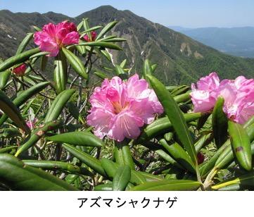f:id:yachikusakusaki:20200503164555j:plain