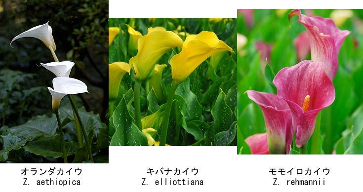 f:id:yachikusakusaki:20200505164241j:plain
