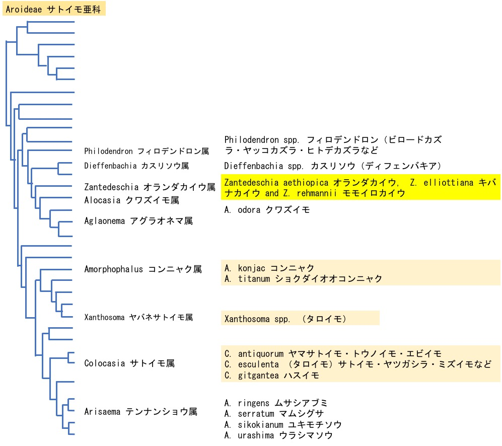 f:id:yachikusakusaki:20200505164518j:plain