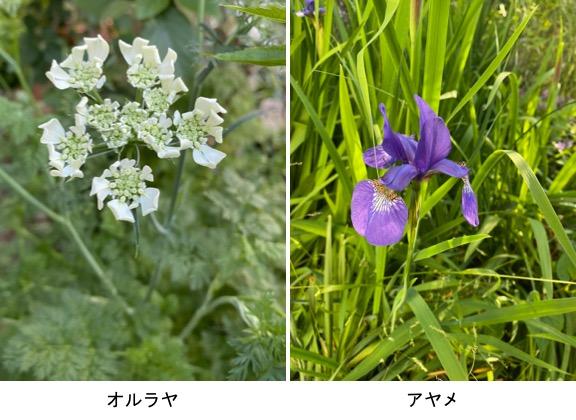 f:id:yachikusakusaki:20200507210655j:plain