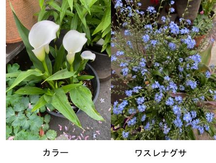 f:id:yachikusakusaki:20200507221502j:plain