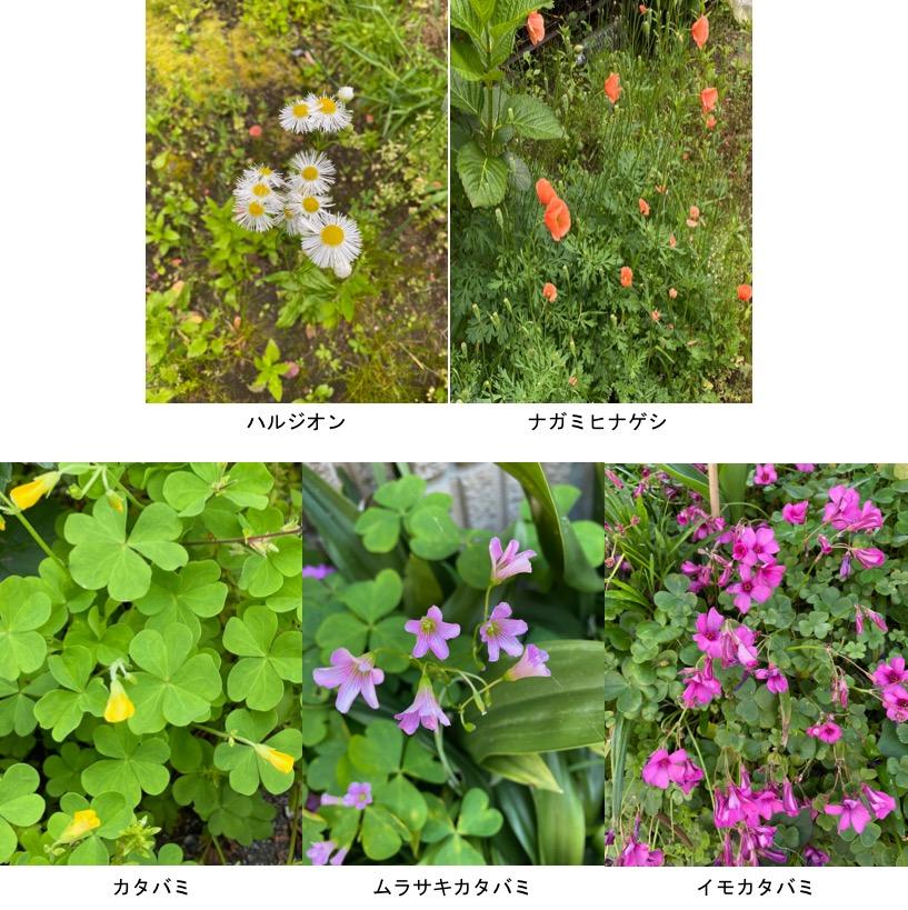 f:id:yachikusakusaki:20200508215707j:plain