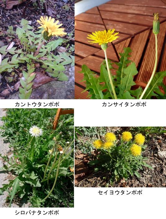 f:id:yachikusakusaki:20200510165944j:plain