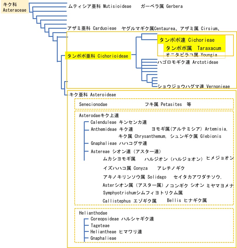 f:id:yachikusakusaki:20200510170132j:plain