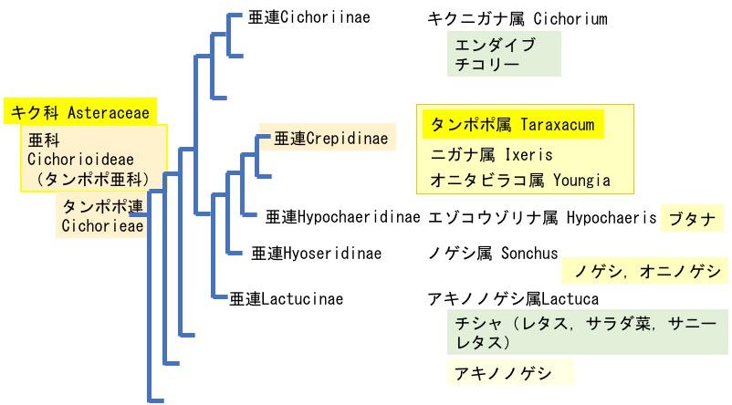 f:id:yachikusakusaki:20200510170151j:plain