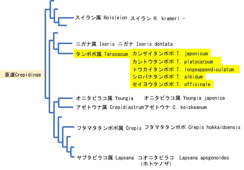 f:id:yachikusakusaki:20200511165753j:plain