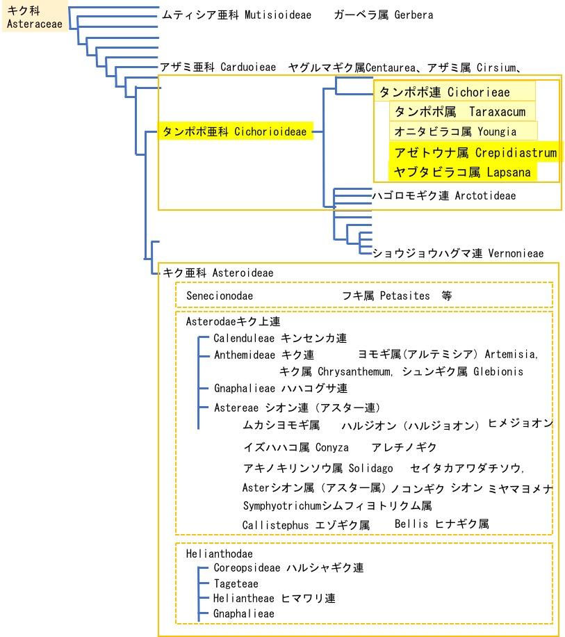 f:id:yachikusakusaki:20200512233517j:plain