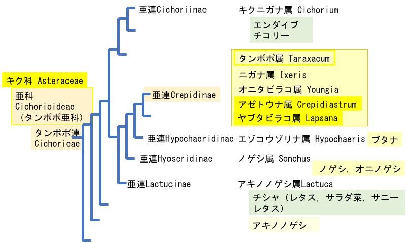 f:id:yachikusakusaki:20200512233528j:plain