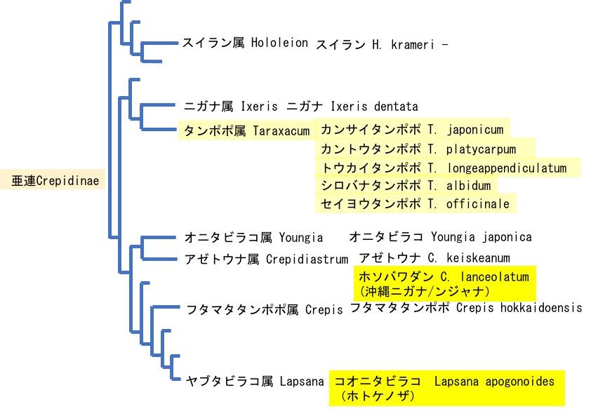 f:id:yachikusakusaki:20200512233538j:plain