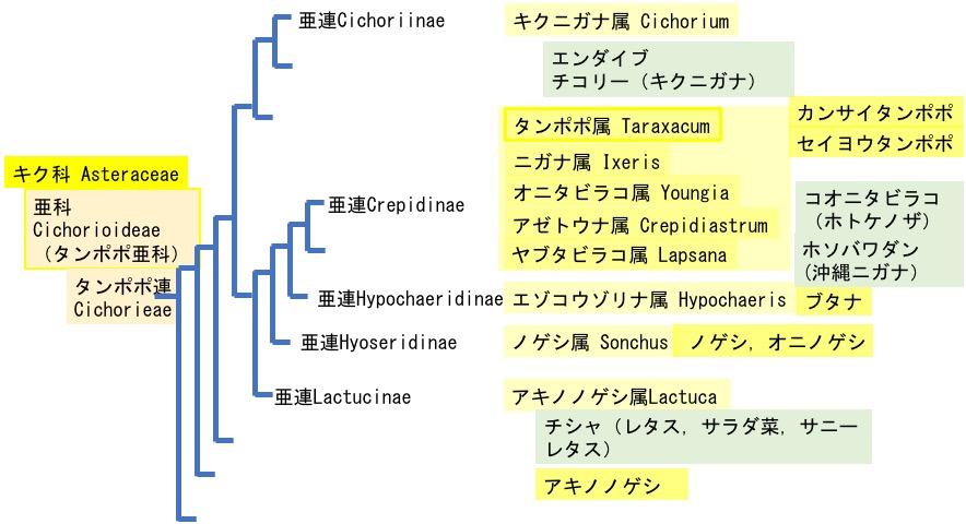 f:id:yachikusakusaki:20200523014246j:plain