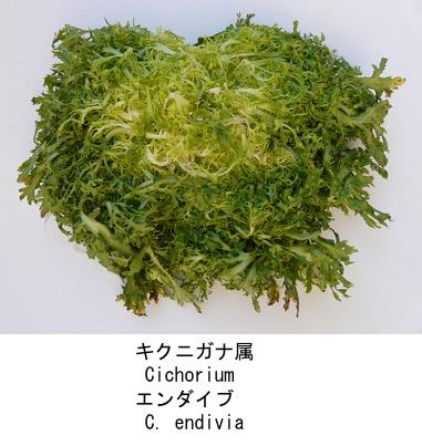 f:id:yachikusakusaki:20200523014514j:plain