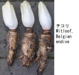 f:id:yachikusakusaki:20200523014543j:plain