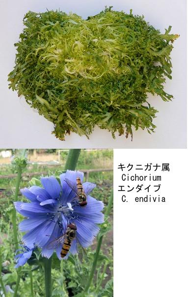 f:id:yachikusakusaki:20200523014614j:plain