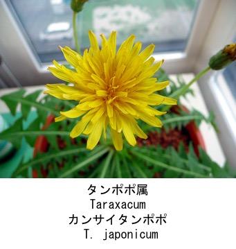 f:id:yachikusakusaki:20200523014707j:plain