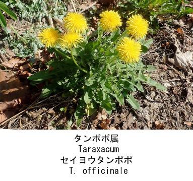 f:id:yachikusakusaki:20200523014729j:plain