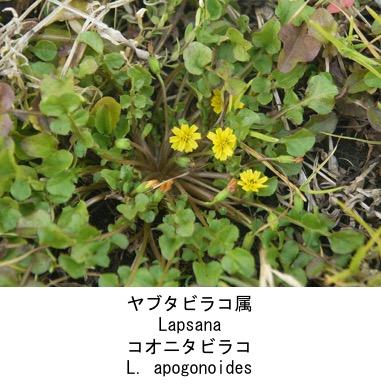 f:id:yachikusakusaki:20200523014755j:plain