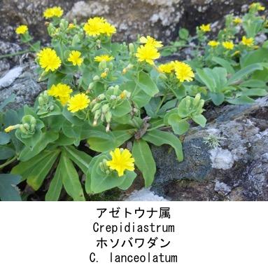f:id:yachikusakusaki:20200523014827j:plain