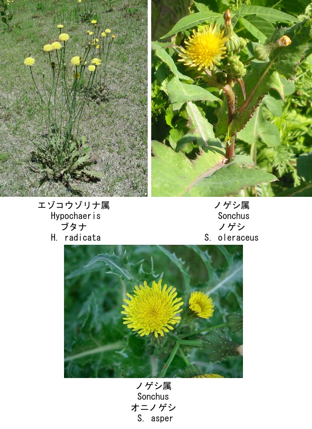f:id:yachikusakusaki:20200523014850j:plain