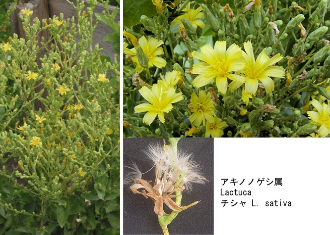 f:id:yachikusakusaki:20200523014910j:plain