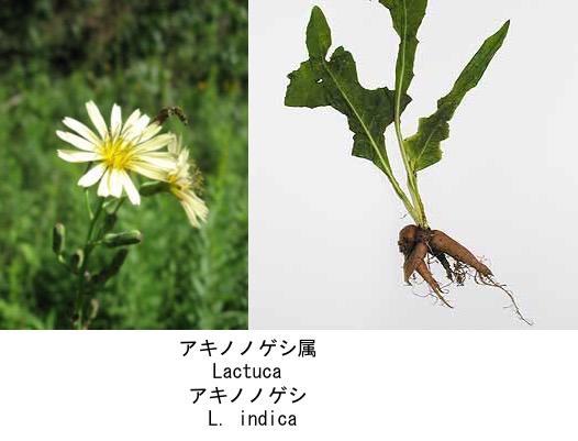 f:id:yachikusakusaki:20200523014939j:plain