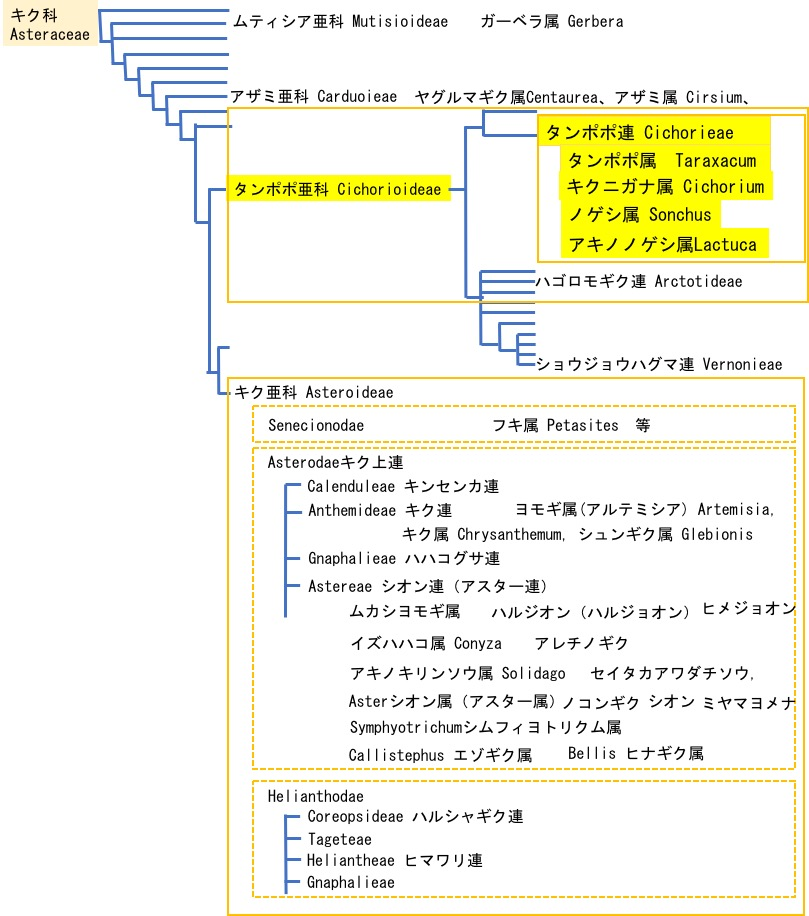 f:id:yachikusakusaki:20200523015539j:plain