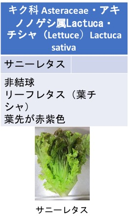 f:id:yachikusakusaki:20200524175435j:plain